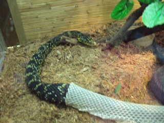 Змея меняет шкуру в Питерском зоопарке